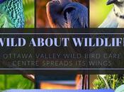 July Wild About Wildlife Month: Featuring Ottawa Valley Bird Care Centre #WildWednesday