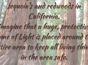 Lightwork Sequoia Trees