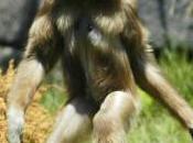Bigfoot News October 2013