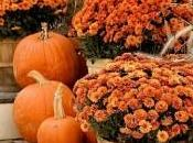 Affordable Fall Activities!