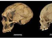 Neanderthals Haggis?
