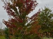 Even More Fall Color