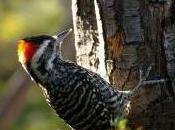 Featured Animal: Bird