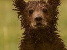 Bears Last Frontier