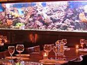 Seafood Lovers Paradise Lucius