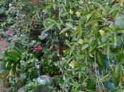 Garden Bloggers' Bloom October 2011