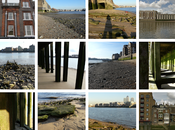 Invited Forage Foreshore""