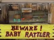 It's Always About Scorpions, Visiting Arizona? Tortilla Flat,