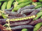 Peas October?