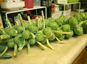 Alien Vegetable (Brussels Sprouts)