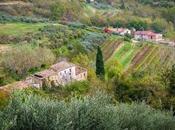 Olive Harvest Full Swing