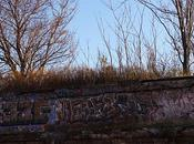 5Pointz Dead! Long Live Graffiti!