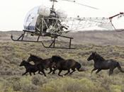 Begin Massive Wyoming Wild Horse Roundup Appease Ranchers