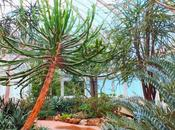 NYBG Conservatory Deserts America Africa