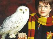 "Harry Potter Snowy Owls ""being Culled Airport Stop Them Endangering Planes"""