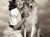 Legends Hollywood Pose with Lovable Canines!