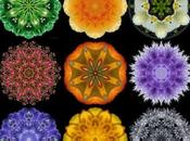 2014 Mandala Meditations Calendar Year Flowers