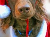 Themed Holidays December