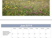 Competition Pair Scottish Landscape Calendars