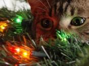 Killed Christmas Tree!