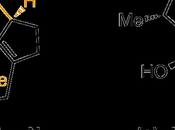 Total Synthesis (-)-Calyciphylline