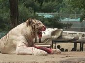 Defending Tiger Mother
