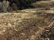 Roads Transmission Corridors Plant Invasions