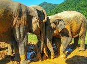 Trip Thailand Defending Asian Elephants