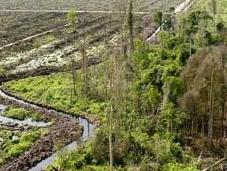 Palm Company Plan Slow Deforestation 'Another Land-Grab'