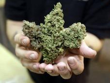 Public Support Legalizing Marijuana Soaring
