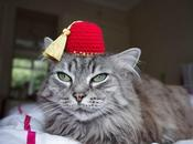 World's Best Images Cats Wearing