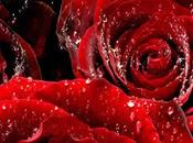 Shower Roses
