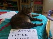 World's Funniest Examples Shaming