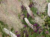 Jardin Plume Normandy
