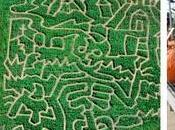 Only Weekend Left Visit Corn Maze This Season!