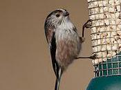 Feed Birds, Pence Bag.