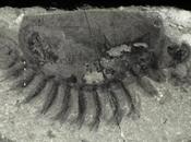 Fossil Hailed Motherlode