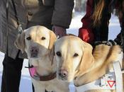 Guide Dogs Have Heard Before