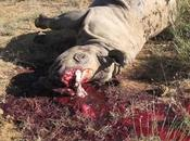After London Wildlife Summit: Already Rhinos Killed Tuesday