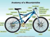 Just Sharing: Anatomy Mountain Bike Parts Components