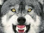Oregon Wolf Population Grows Modestly 2013