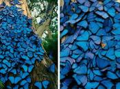 World's Most Amazing Tree Swarms