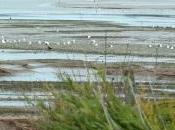 Hayle Estuary Porth Kidney Sands