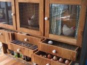 Dutch Designer's Modern Chicken Coop