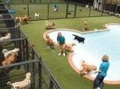 Raising Puppy with Help Good Doggie Daycare