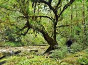Tropical Rainforest Biome Plants