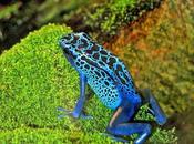 Various Tropical Rainforest Animals