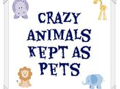 Crazy Animals Some Insane People Decide Keep Pets