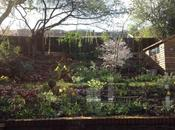 Garden This Weekend 23rd March 2014