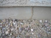 Termite Facts from NPMA Awareness Week